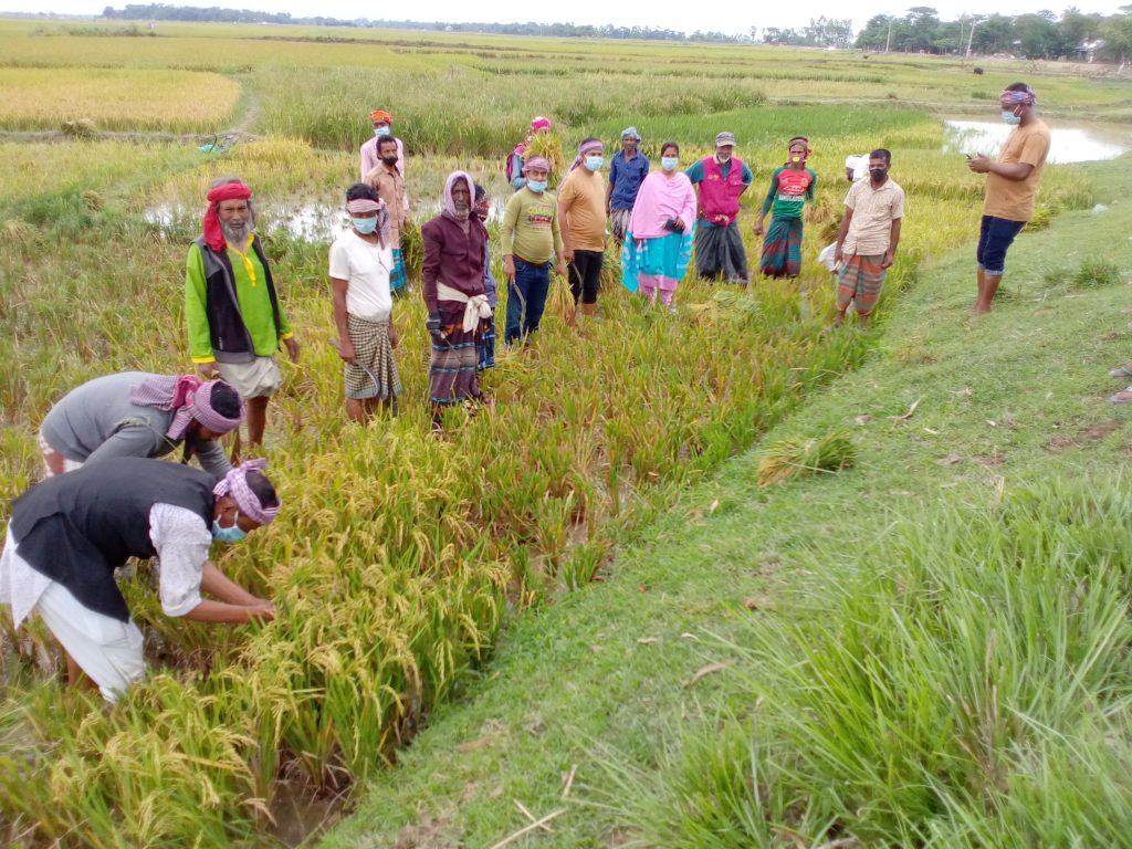 দক্ষিণ সুনামগঞ্জে কৃষকের পাশে কৃষকলীগ