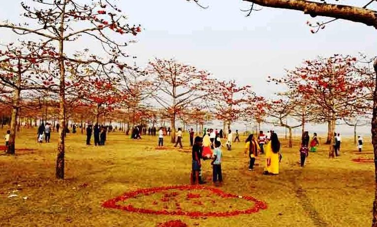 ফুলে ফুলে সু -শোভিত তাহিরপুরের শিমূল বাগান