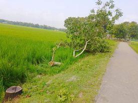 কমলগঞ্জে সড়কের পাশে লাগানো গাছ কেটে নিয়েছে দুর্বৃত্তরা